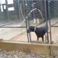 Bologna, la denuncia degli animalisti: