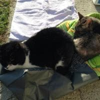 Imola Il Gattile è In Bolletta Appello Social Ci Aiutate A