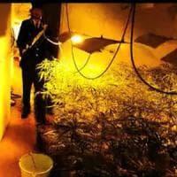Imola, serra di marijuana da un milione di euro nella villetta in campagna