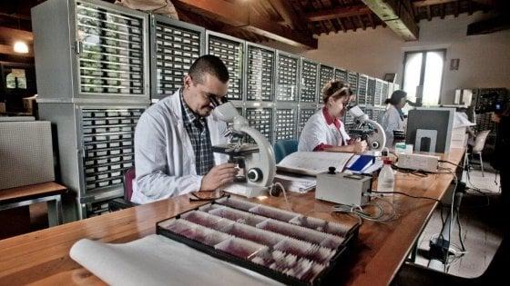 """L'istituto Ramazzini e la fatica di assumere giovani: """"Ma la nostra ricerca la conosce tutto il mondo"""""""