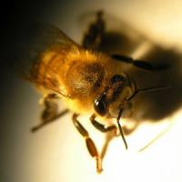 La ricerca: le api fanno rinascere il verde dopo incendi e devastazioni