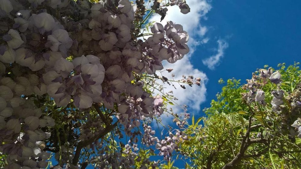 Una tavolozza di fiori: a primavera la Valsamoggia indossa il suo abito più bello