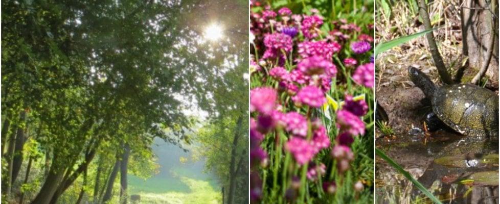 Night trek, tartarughe, escursioni nei parchi e sagre nel weekend a Bologna e dintorni
