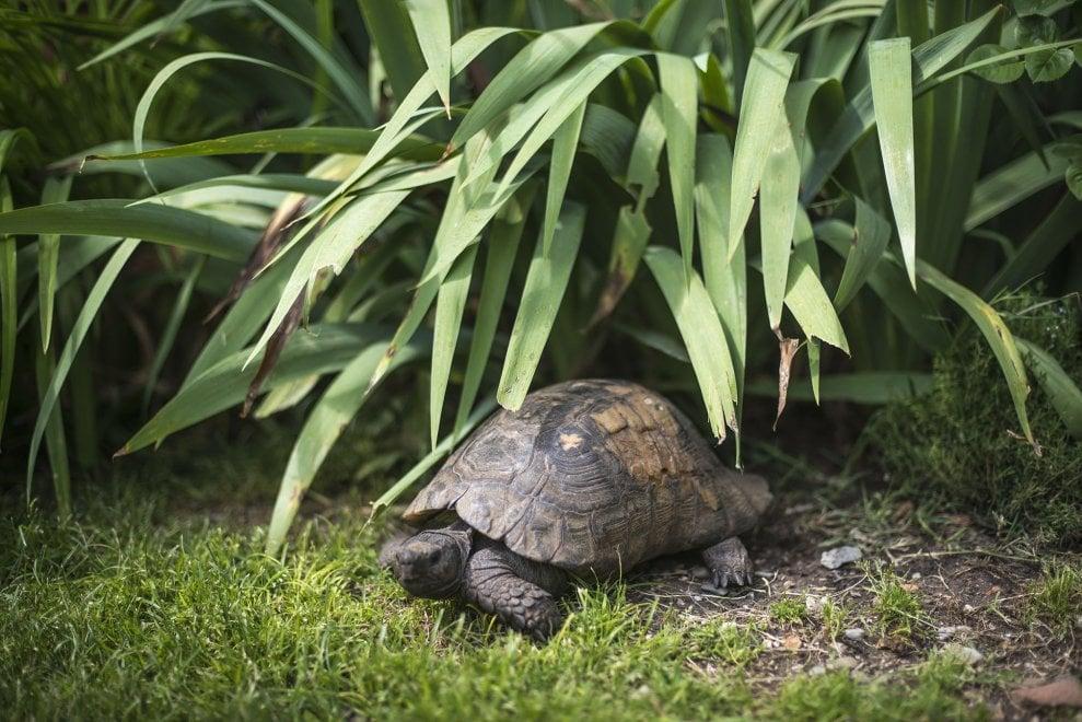 Ugo la tartaruga, pappagalli e tanto verde: l'oasi fuori dal tempo nel centro di Bologna
