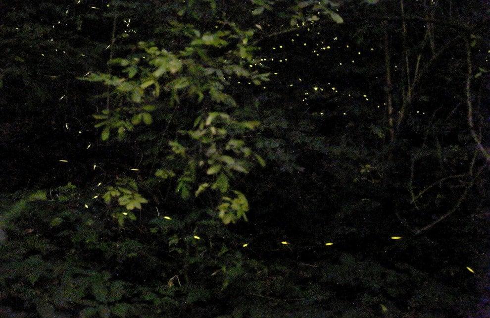 Bologna, la magica danza delle lucciole nel parco