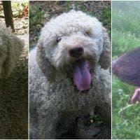 Rapiti tre cani nel Bolognese, il disperato appello della famiglia