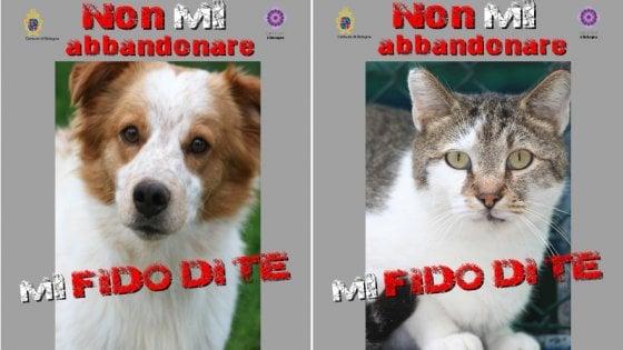 Cani E Gatti Abbandonati Il Vademecum Del Comune Di Bologna