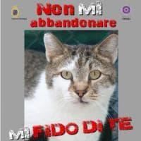 Cani e gatti abbandonati, il vademecum del Comune di Bologna