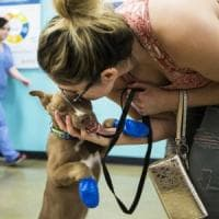 Diete, visite e massaggi scontati: scoperti dai Nas falsi dentisti e veterinari