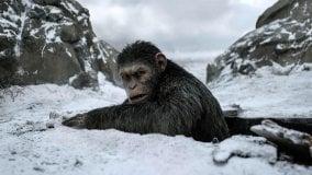 """I film in programmazione a Bologna  """"The war. Il pianeta delle scimmie"""" il terzo episodio della saga"""