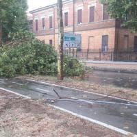 Dopo il caldo la tempesta: pioggia, vento e alberi caduti sui viali a Bologna