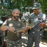 Non solo cani e gatti: a Modena abbandonato persino un varano