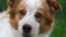 """""""Salvate cani e gatti"""":  campagna del Comune  contro gli abbandoni"""