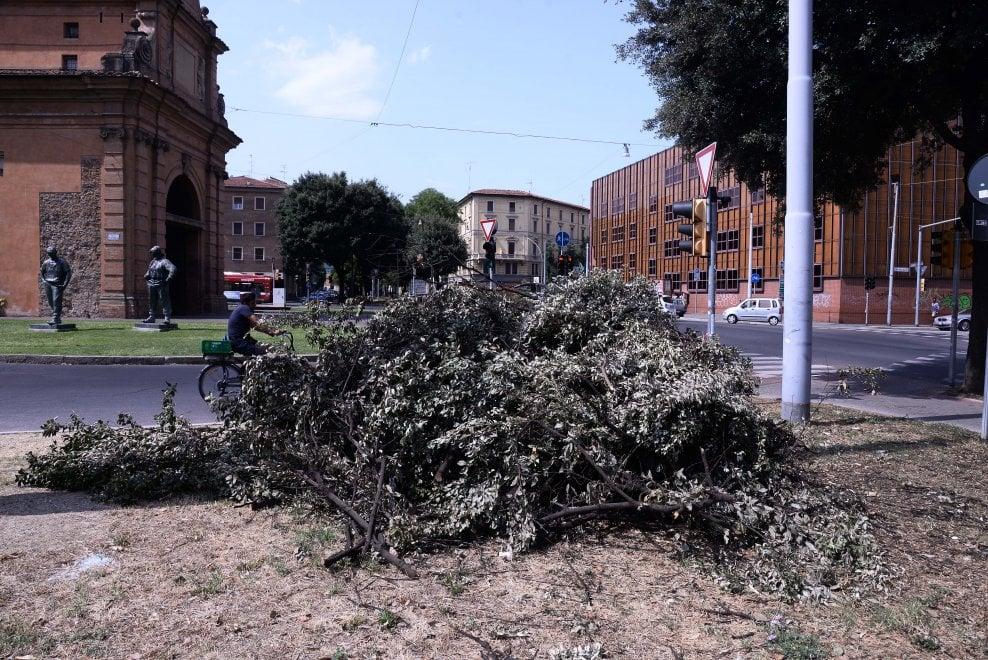 Le prime vittime del clima impazzito: a Bologna la strage degli alberi