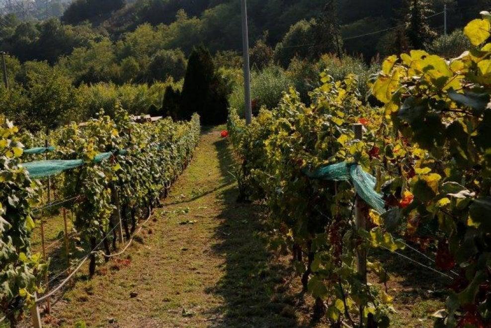 Grano, miele, latte, frutta: tutti i danni di caldo e siccità in Emilia-Romagna