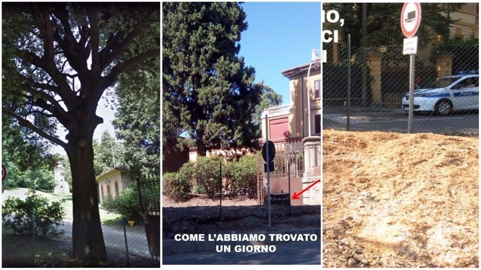 """Addio al leccio secolare di Villa Spada. La lettera: """"Il verde a Bologna si è diradato"""""""