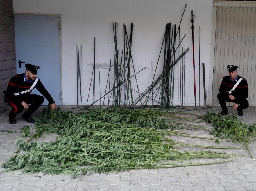 Nel Bolognese scoperta una piantagione di marijuana