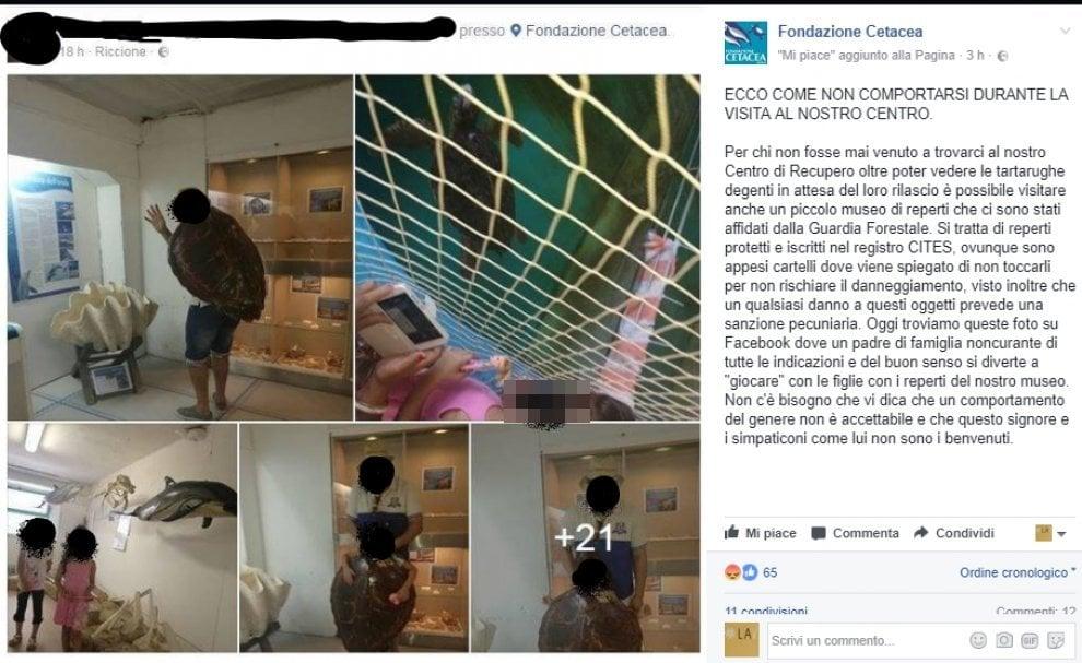 Ecco cosa non dovete fare se visitate l'ospedale delle tartarughe di Riccione