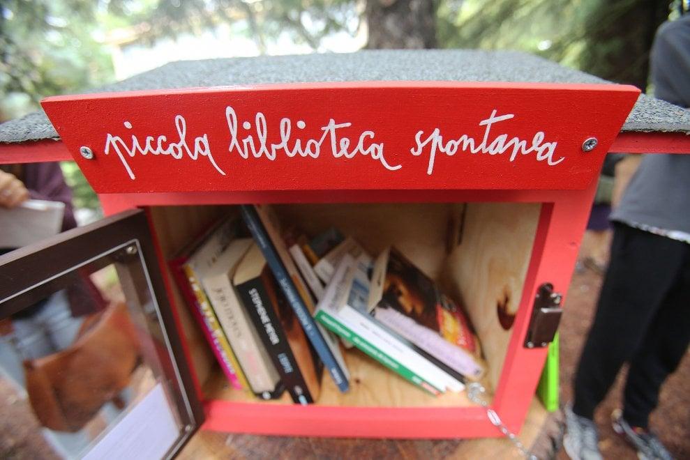 Nel giardino dell'Università di Bologna, sul tronco di un albero, spunta una 'piccola biblioteca spontanea'