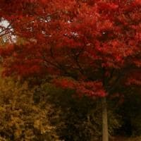 A caccia di colori d'autunno: dove ammirare il foliage a Bologna