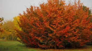 A caccia di colori d'autunno/  mappa   dove ammirare il foliage in città