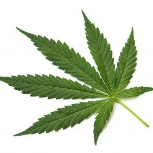 Due tonnellate di marijuana e hashish sequestrate a Ravenna