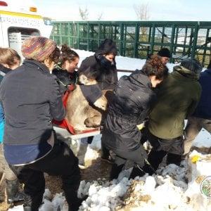 Maltempo nel Bolognese, danni per neve anche al Centro fauna selvatica di Monte Adone