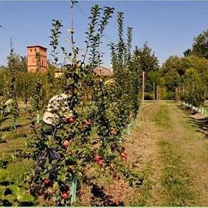 Gli appuntamenti di martedì 21 a Bologna e dintorni: La festa degli Alberi