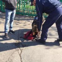 Bologna, l'agente a quattrozampe Iago scova droga nascosta al parco della