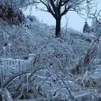 """Un panorama da """"Frozen"""": Emilia-Romagna, piante e arbusti imprigionati nel gelo"""