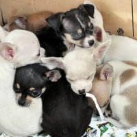 Cuccioli importati illegalmente e poi lasciati al freddo e senza cibo: Cassazione