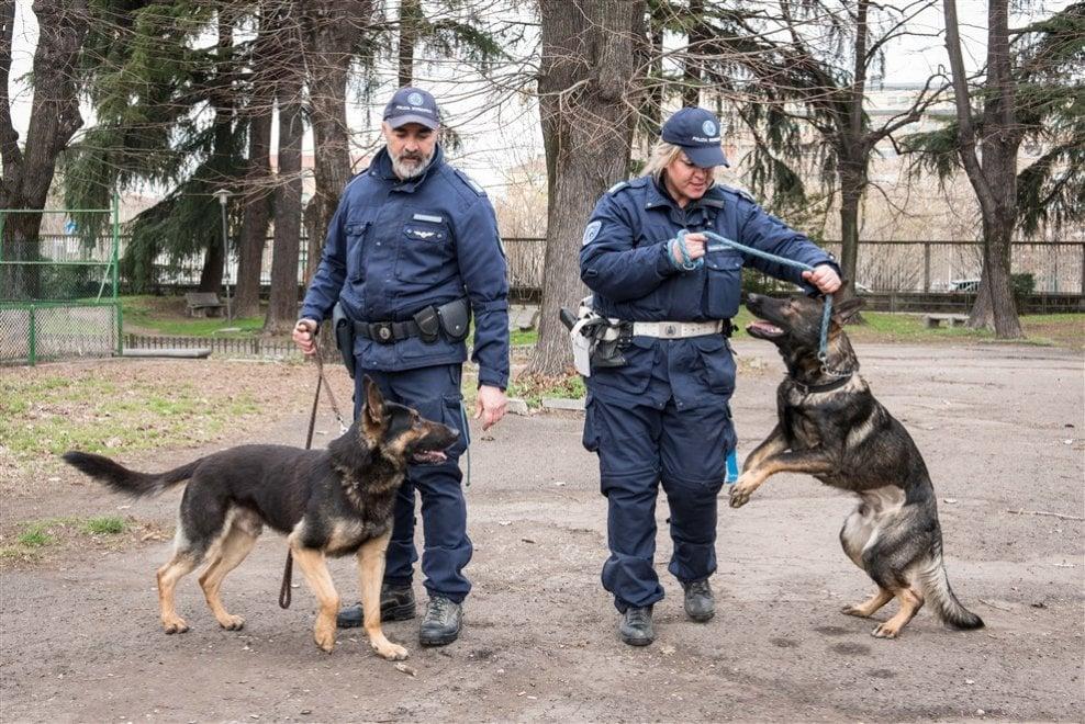 Qua la zampa agente: in azione i cinque cani antidroga di Bologna, l'incubo degli spacciatori