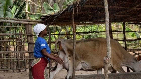 Africa, ripartire dalle donne e dalla terra: una campagna per adottare e sostenere le allevatrici di mucche del Mozambico