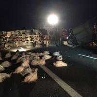 A1, camion che trasporta tacchini si ribalta nel Bolognese: fino a 14 km di coda