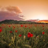 Memoria al chiar di luna, nelle terre del Pignoletto: il weekend nei dintorni