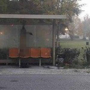 Orrore: lupo impiccato alla fermata del bus, denunciate due persone