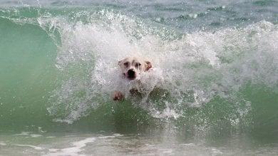 """Rimini: """"Sì ai cani in spiaggia"""". Ecco le regole"""