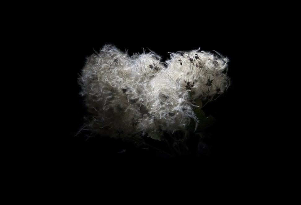 Ritorno alla natura perduta: le immagini di Enzo Sbarra in mostra a Bologna