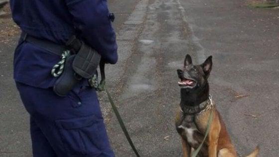 Bologna, una medaglia al cane della Municipale andato in pensione