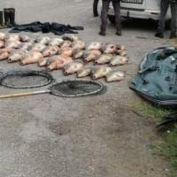 """Operazione """"Carpe diem"""" contro il bracconaggio ittico in Emilia-Romagna e Veneto: """"Pesca illegale con elettrostorditori"""""""