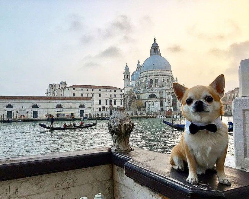 Hotel e foto in giro per il mondo: ecco Miami, il travel blogger a quattro zampe che sta conquistando Instagram