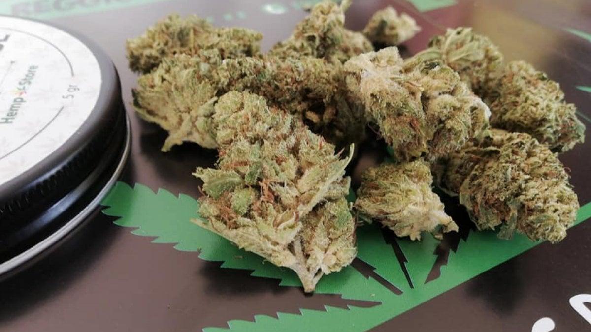 La marijuana arriva comodamente a domicilio l 39 idea di due for Domicilio legale