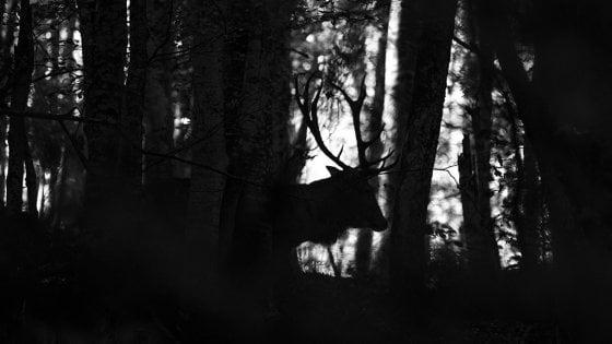 Il bramito del cervo, in Mtb dal Silla al Dardagna: il weekend nei dintorni di Bologna
