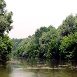 Fra boschi di edere e cascatelle il fiume Reno racconta la sua storia