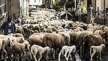 """Transumanza a Fanano """"Una strada di lana"""""""