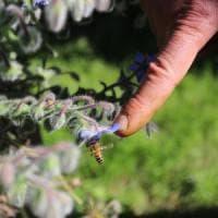 La rivoluzione delle api: un libro-inchiesta racconta perché dobbiamo difenderle