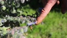 La rivoluzione delle api:  un libro racconta perché dobbiamo difenderle