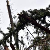 Muore potando gli alberi del paese, incidente sul lavoro nel Piacentino,