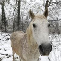 Santa Lucia porta la neve in pianura, anche a Bologna