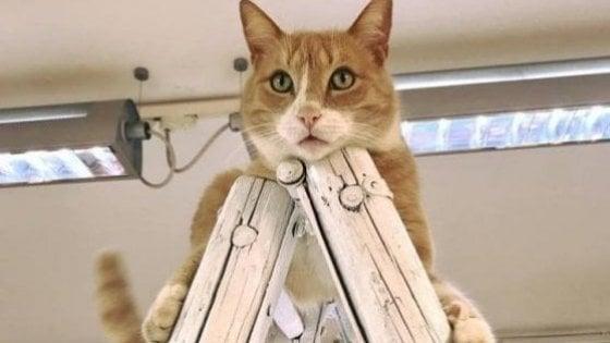 San Giovanni in Persiceto avrà una statua dedicata a Re Gino, il gatto amato da tutti